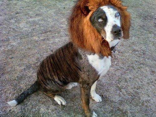 ... Archive » Elder Berry: a Catahoula Leopard Dog - (640x413 - 140kB